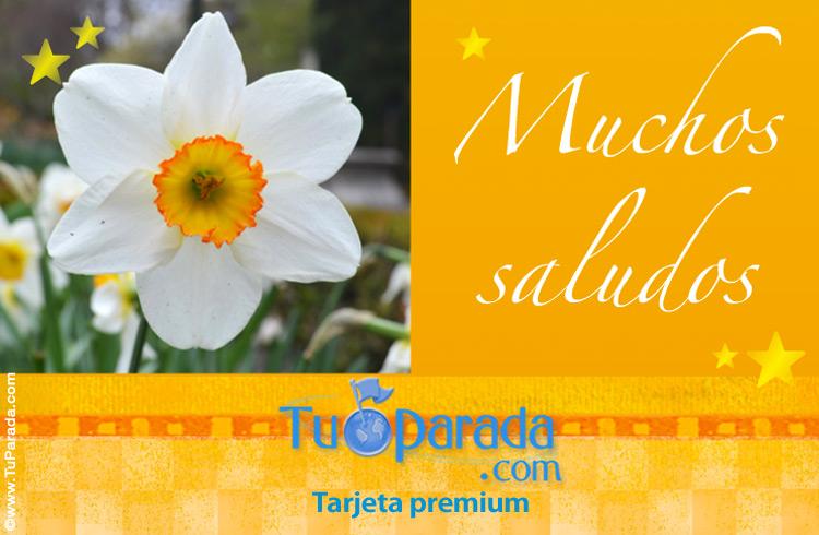 Tarjeta de saludos con flores, Modelos de flores, tarjeta digital