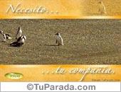 Tarjetas postales: Necesito...
