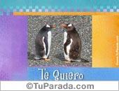Tarjetas postales: Pingüinos románticos