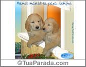 Cartão - A amizade que compartilhamos ...