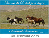 Paisajes - Tarjetas postales: Libertad