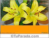 Tarjetas postales: Que te mejores pronto con flores.