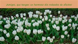 Tarjetas postales: Flores