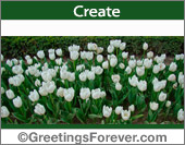 White tulips postcard
