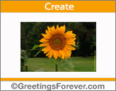 Ecard with sunflower