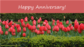 Ecards: Happy Anniversary!
