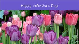 Ecards: Valentines day with flowers