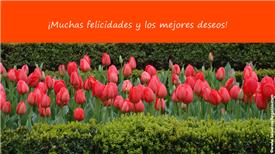 Tarjetas postales: Los mejores deseos con flores