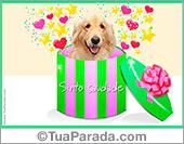 Cartões postais: Cartões de animais