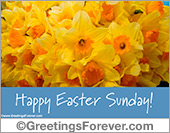 Easter ecard with yellow flowers