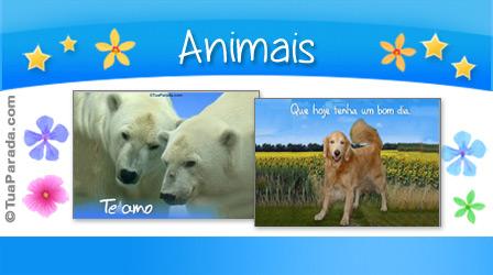 Cartões de animais