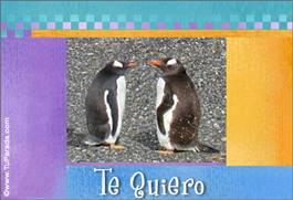Pingüinos románticos