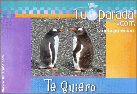 Tarjeta - Pingüinos románticos