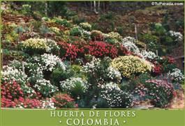 Huerta de flores - Colombia