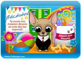 Tarjeta-juego: Chihuahua varón