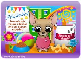 Tarjeta-juego: Chihuahua mujer