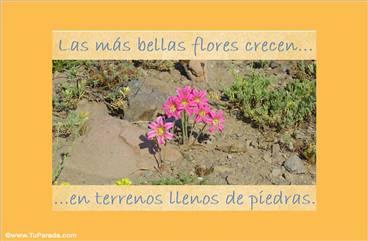 Las más bellas flores...