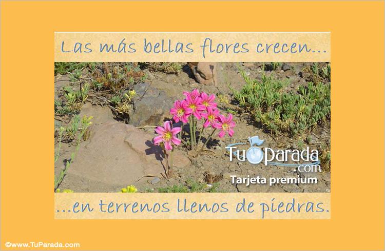 Tarjeta - Las más bellas flores...