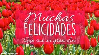 Tarjeta de felicidades con coloridos tulipanes