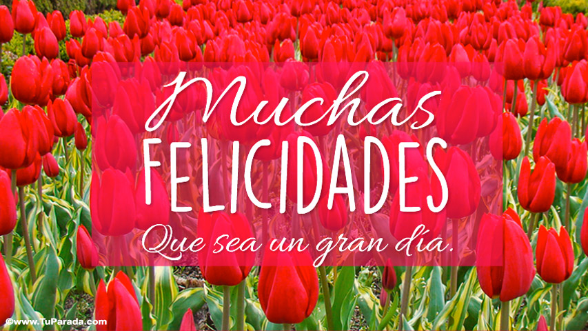 Tarjeta - Tarjeta de felicidades con tulipanes