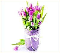 20 tulipanes lilas en florero