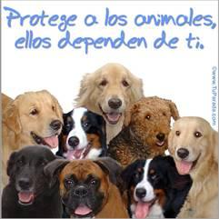 Protege a los animales