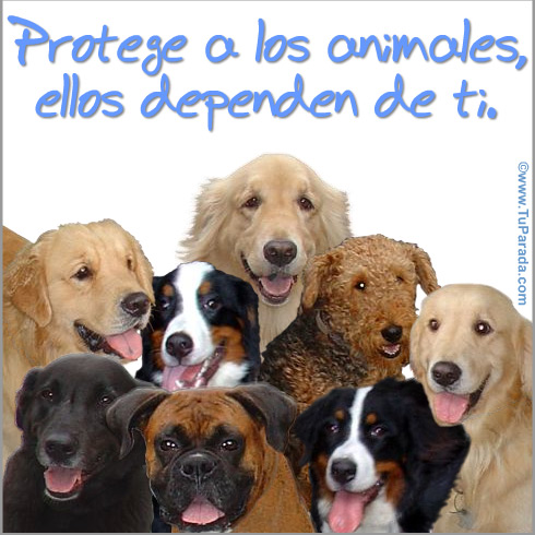 Tarjeta - Protege a los animales