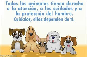 Tarjeta de Cuidado de los animales