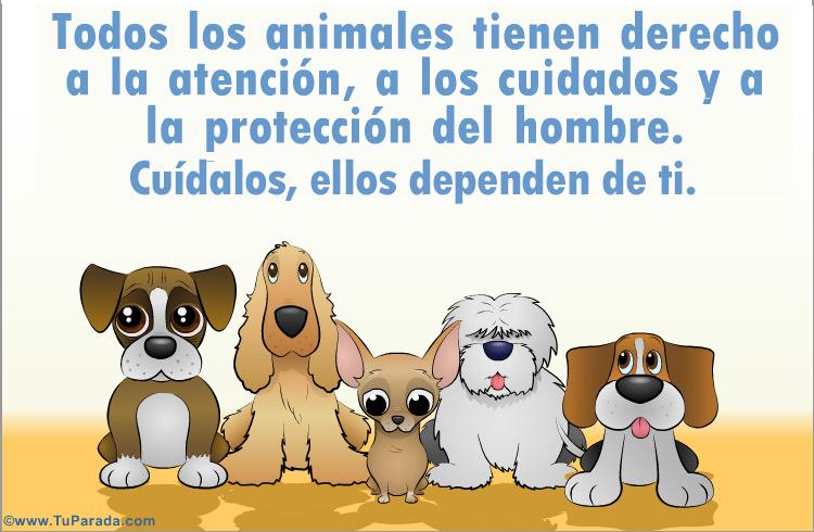 Tarjeta - Tarjeta de Cuidado de los animales