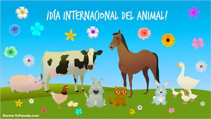 Día internacional del animal