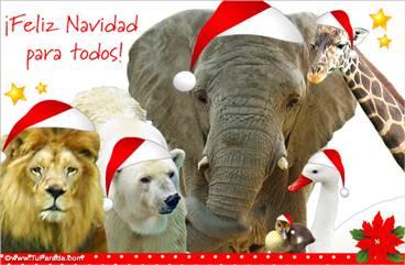 Tarjeta de Navidad desde el zoológico