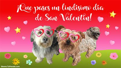 Feliz San Valentín con perritos