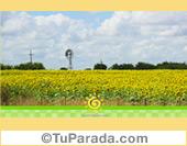 Foto de campo con girasoles