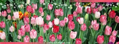 Foto de tulipanes rosas