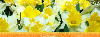 Foto de flores amarillas