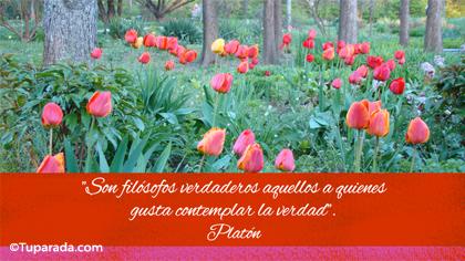 Tarjeta de Platón