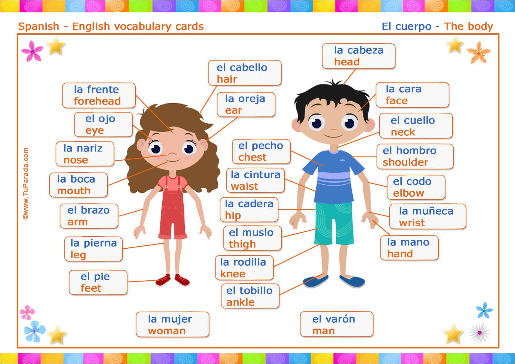 Tarjeta - Vocabulario: Cuerpo - Body