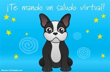 Saludos con Mini Bulldog