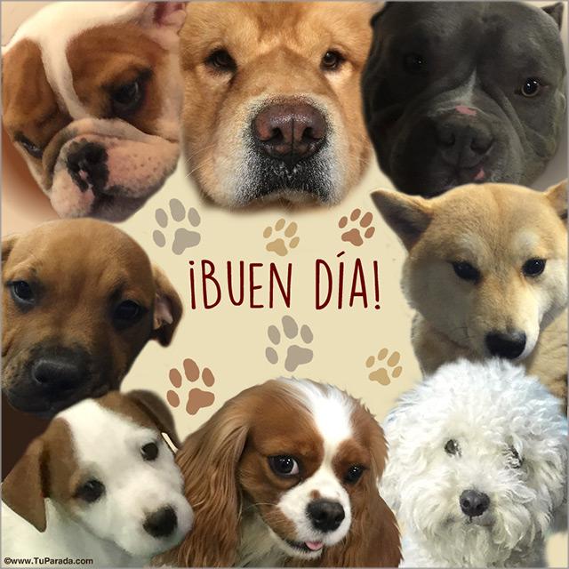 Tarjeta - Buen día - Con perritos