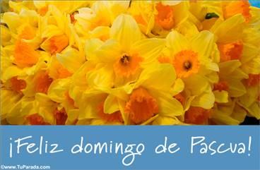 Tarjeta de Pascua con flores amarillas