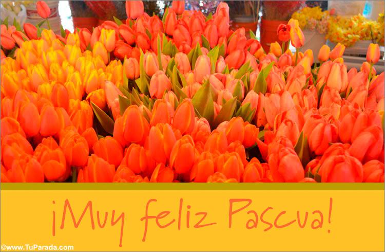 Tarjeta - Tarjeta de tulipanes para Pascua