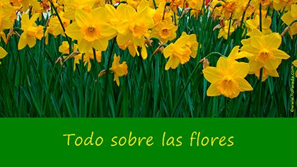 Crear tarjeta de Flores