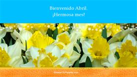 Tarjeta de Flores
