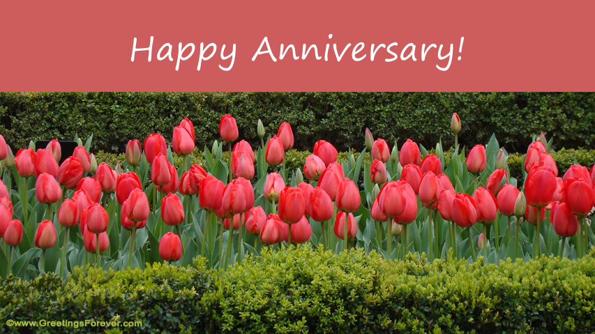 Ecard - Happy Anniversary!
