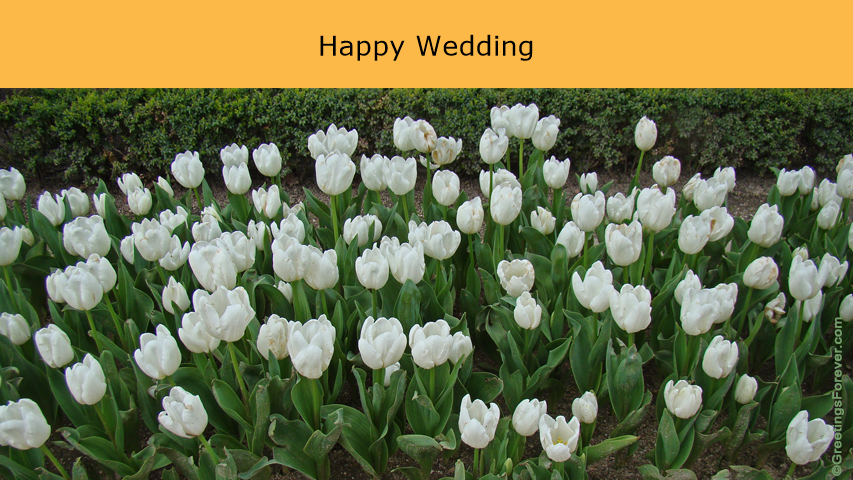 Ecard - Happy Wedding