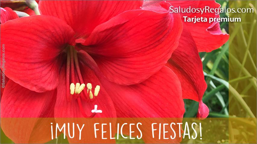 Tarjeta - Felices fiestas con cálida flor
