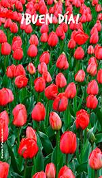 Fondo para móviles: Buen día con tulipanes