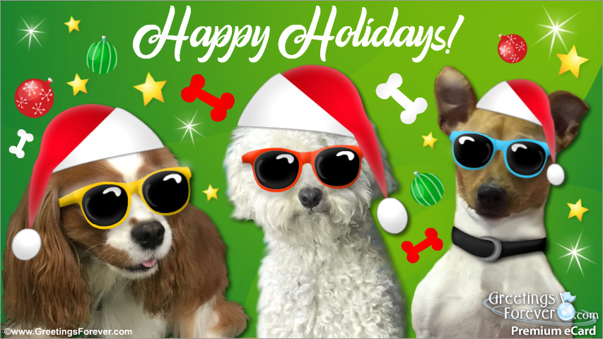 Ecard - Christmas ecard with funny dogs
