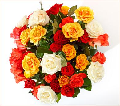 Ramo de doce rosas de colores cálidos