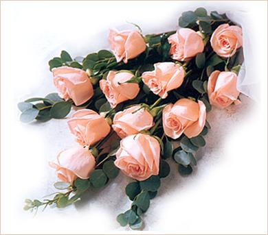 Doce rosas rosadas importadas en ramo pastora